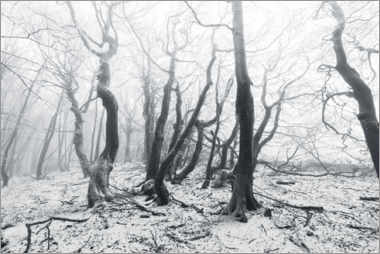 Lerretsbilde  Mystical forest in the snow and fog - The Wandering Soul