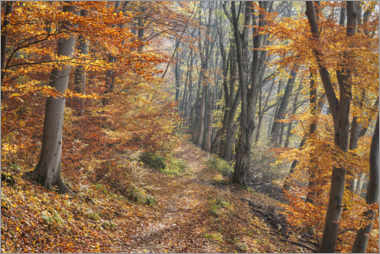 Lerretsbilde  Forest path in late autumn - The Wandering Soul
