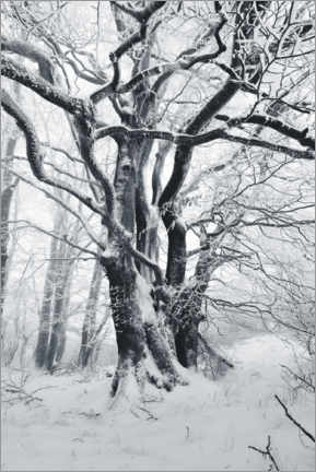 Lerretsbilde  Mystic tree in frost and snow - The Wandering Soul