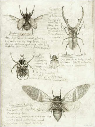 Galleriprint  Insects - Mike Koubou