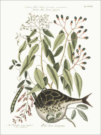 Akrylbilde  Puffer fish and bean plant - Wunderkammer Collection