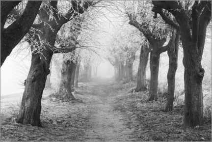 Galleriprint  Linden avenue in the fog on a winter morning - The Wandering Soul