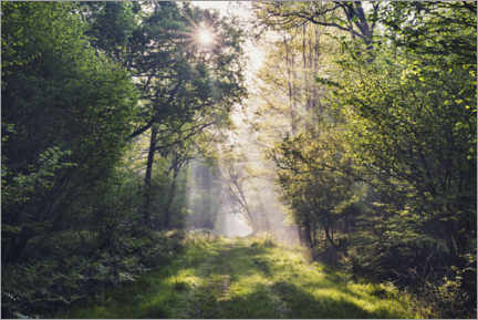 Galleriprint  Forest path with rays of light at sunrise - The Wandering Soul