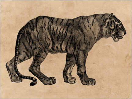 Plakat  The Tiger - Wunderkammer Collection