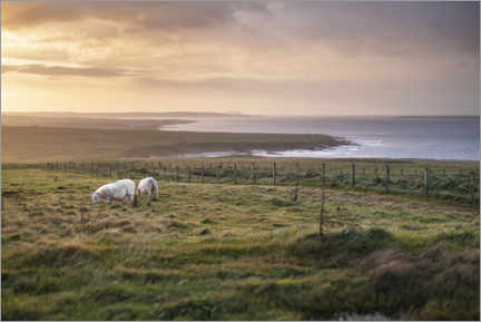 Lerretsbilde  Sheeps by the sea at sunset in Scotland - The Wandering Soul