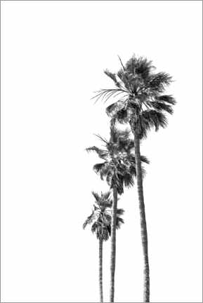 Plakat Black and white palm trees