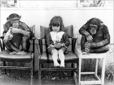 Galleriprint  Two chimpanzees and a girl drinking coke - John Drysdale