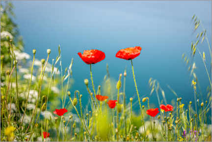 Plakat Poppies meadow by the lake