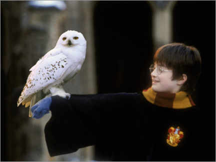 Galleriprint  Harry Potter and the Sorcerer's Stone - Harry & Hedwig