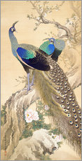 Galleriprint  Two peacocks in spring - Imao Keinen
