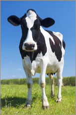 Galleriprint  Cow - Black and White