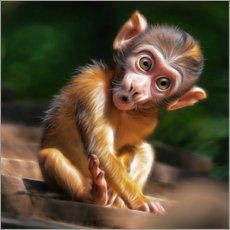 Galleriprint  Baby Monkey - Photoplace Creative