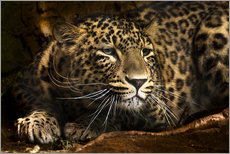 Galleriprint  Leopard on the lookout - Edith Albuschat