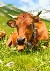Galleriprint  Cow with bell on mountain pasture