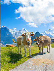 Galleriprint  Cows on the pasture
