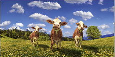Galleriprint  Cows on the pasture - Michael Rucker