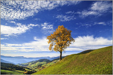 Galleriprint  Isolated tree in autumn, Funes Valley, South Tyrol, Italy - Roberto Sysa Moiola