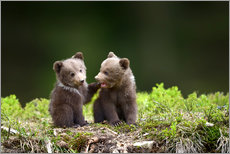 Galleriprint  Two young brown bears