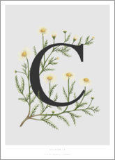Plakat  C is for Chamomile - Charlotte Day