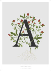 Plakat  A is for Asparagus Pea - Charlotte Day