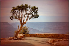 Akrylbilde  Tree over Grand Canyon - fotoping