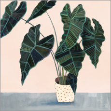 Plakat Alocasia in dotted pot