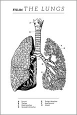Akrylbilde  Lungs Vintage Chart (English) - Wunderkammer Collection