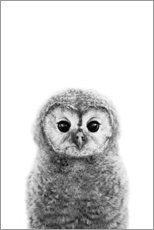 Selvklebende plakat  Young owl - Art Couture