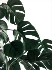 Plakat  In the shadow of the Monstera - Emanuela Carratoni