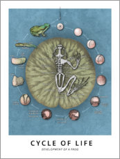 Akrylbilde  Cycle of life - Development of a frog - Wunderkammer Collection