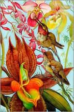 Galleriprint  Exotic birds on orchids