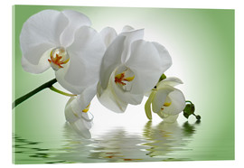Akrylbilde  Orchid with Reflection - Atteloi