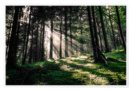 Plakat Light rays in the forest