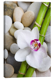 Lerretsbilde  Bamboo and orchid - Andrea Haase Foto