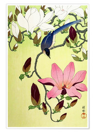 Plakat  Magpie with Pink and White Magnolia Blossoms - Ohara Koson