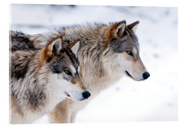 Akrylbilde  Two Wolves in the snow - Louise Murray