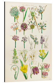 Aluminiumsbilde  Wildflowers - Sowerby Collection