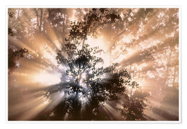 Plakat Fog and sun rays in forest