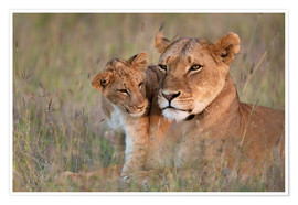 Plakat Lioness with cub