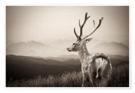 Plakat  Stag in the mountains
