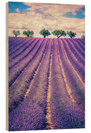 Trebilde  Lavender field with trees in Provence, France