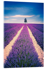 Akrylbilde  Lavender field with tree in Provence, France
