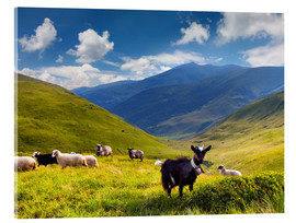 Akrylbilde  Herd of sheep and goats in the mountains
