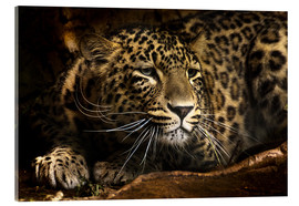 Akrylbilde  Leopard on the lookout - Edith Albuschat