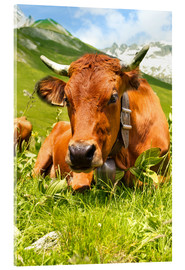 Akrylbilde  Cow with bell on mountain pasture