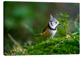 Lerretsbilde  Cute tit standing on the forest ground - Peter Wey
