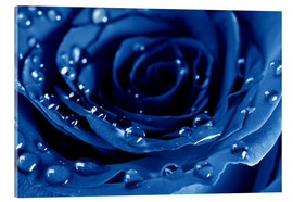 Akrylbilde  Blue Roses with Water Drops