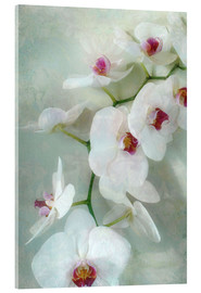 Akrylbilde  Composition of a white orchid with transparent texture - Alaya Gadeh