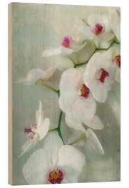 Trebilde  Composition of a white orchid with transparent texture - Alaya Gadeh