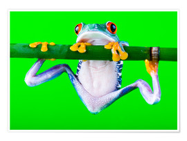 Plakat  colorful frog on green